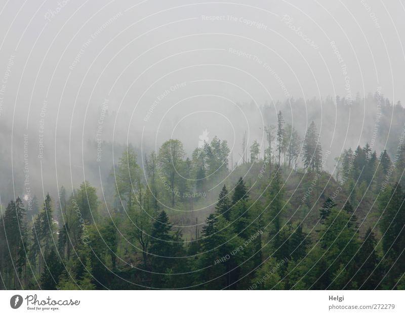 Hochnebel Umwelt Natur Landschaft Pflanze Frühling Nebel Baum Mischwald Fichte Buche Wald Berge u. Gebirge stehen Wachstum außergewöhnlich dunkel hoch kalt nass