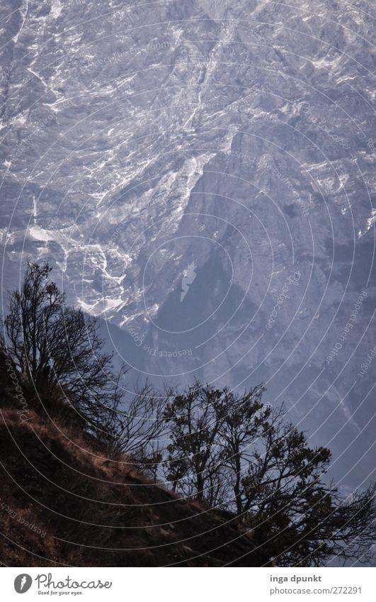 Survivors Natur Baum Pflanze Einsamkeit Winter Ferne Umwelt Landschaft dunkel kalt Berge u. Gebirge Felsen außergewöhnlich Tourismus Urelemente Sträucher