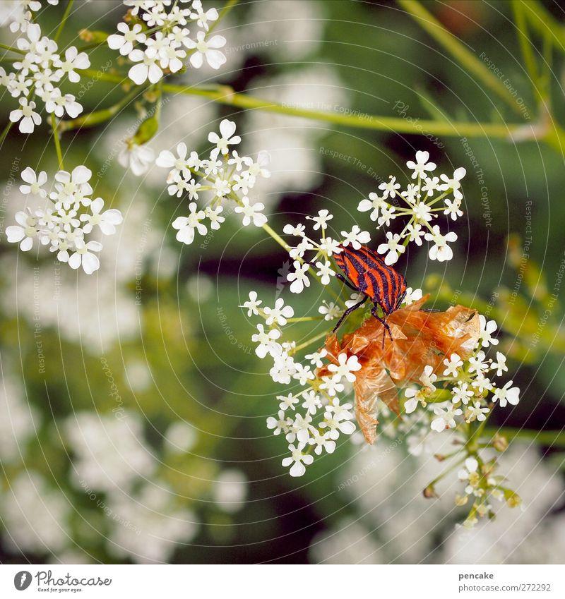 seht euch mal die wanz an Natur Pflanze Tier Frühling Sommer Wildtier Streifenwanze 1 Wanze Insekt Waldrand gestreift rot schwarz Haut häuten Farbfoto