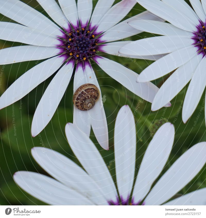 Schnecke auf der Blume Riesenglanzschnecke Tier Wanze Insekt klein Panzer Natur Pflanze Garten Außenaufnahme Zerbrechlichkeit niedlich Beautyfotografie