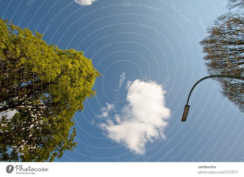 Bäume, Wolken, Himmel und Laterne Himmel Natur Stadt Pflanze Himmel (Jenseits) Sommer Baum Wolken Umwelt Architektur Berlin Park Wetter Klima Schönes Wetter Laterne