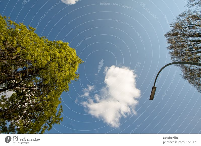Bäume, Wolken, Himmel und Laterne Umwelt Natur Sommer Klima Klimawandel Wetter Schönes Wetter Pflanze Baum Park Stadt Architektur gut Berlin lankwitz