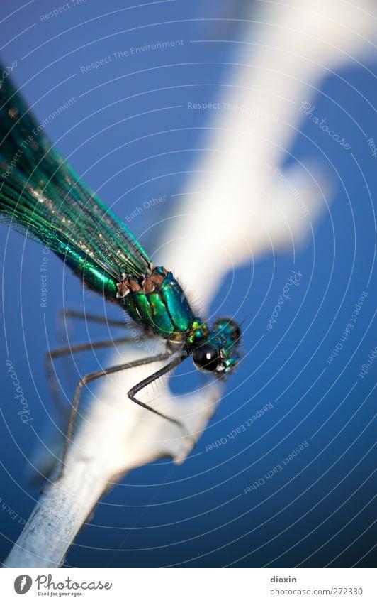 Jailbird Natur Tier Erholung Umwelt klein Metall glänzend sitzen warten Flügel Insekt leicht filigran Libelle Stacheldraht Stacheldrahtzaun