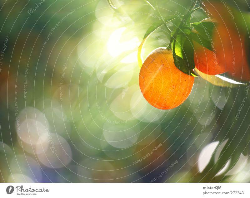 Orange Garden I Natur Pflanze grün Gesundheit Frucht orange Zufriedenheit Orange ästhetisch hängen reif ökologisch fruchtig Saft mehrfarbig vitaminreich