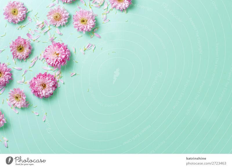 Blumenkomposition auf pastellfarbenem Hintergrund Design Dekoration & Verzierung Hochzeit Frau Erwachsene Mutter Kunst oben rosa Kreativität Postkarte