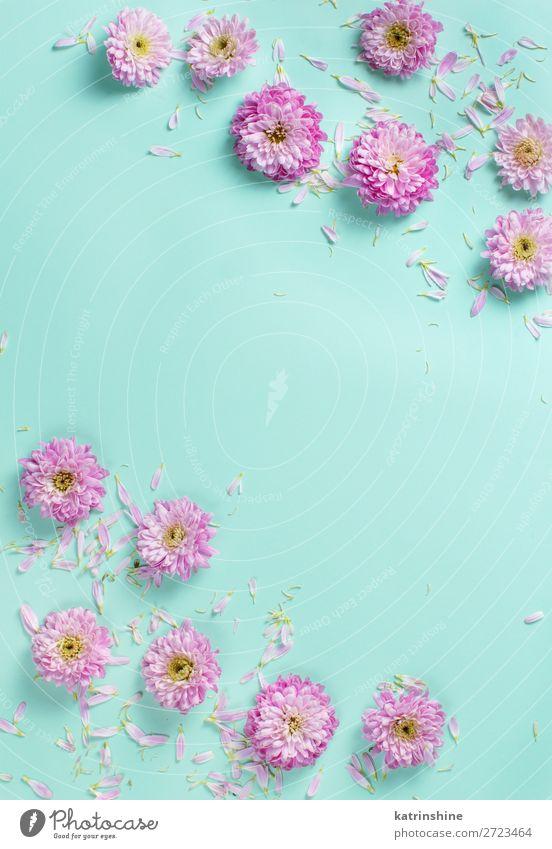 Blumenzusammensetzung mit Blüten und Blütenblättern Design Dekoration & Verzierung Hochzeit Frau Erwachsene Mutter Kunst oben rosa Kreativität Hintergrund