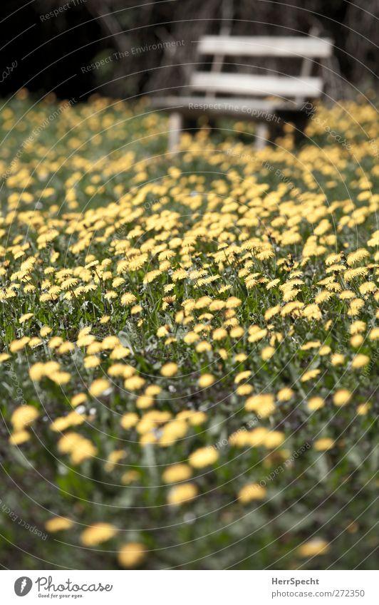 Don't step on the dandylions Natur Landschaft Frühling Schönes Wetter Blume Gras Blüte Grünpflanze Park Wiese schön gelb grün Lebensfreude Frühlingsgefühle