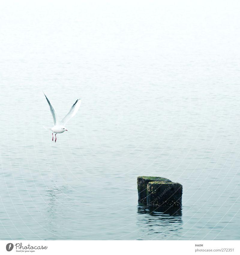 Landeanflug Meer Umwelt Natur Tier Urelemente Wasser Himmel Klima Wetter Ostsee Wildtier Vogel Flügel 1 fliegen authentisch einfach Einsamkeit Möwenvögel