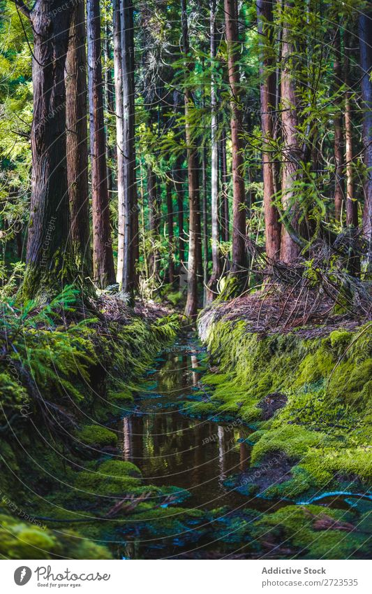 Großer Felsen mit Moosbefall Wachstum nass Höhle grün Natur Stein natürlich Konsistenz Umwelt frisch Wand Gras Azoren Oberfläche Blatt abstrakt schön