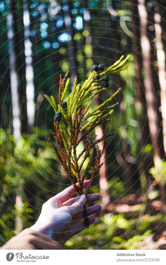 Wald mit Bäumen und Moos Baum Süden alt Natur Eiche Landschaft Wurzel live Eichen grün natürlich Pflanze Menschenleer Wildnis Außenaufnahme Sonne horizontal