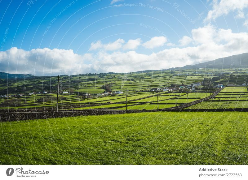 Luftbild zu grünen Feldern Aussicht Natur Wiese Gras Landschaft ländlich Sommer Pflanze Azoren Frühling Rasen Landen Umwelt Jahreszeiten Bauernhof schön