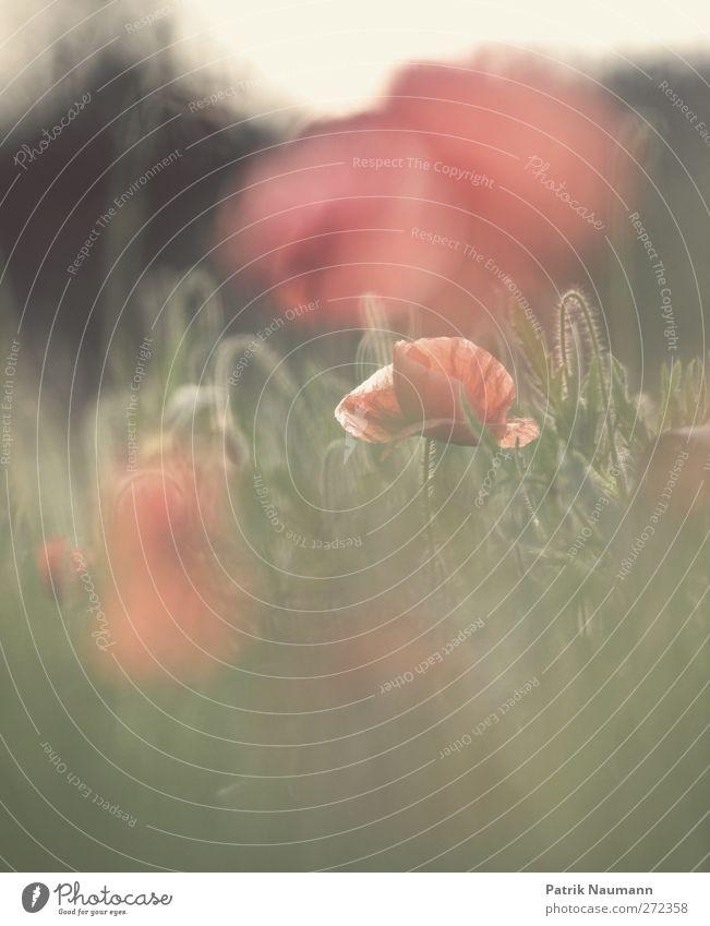 hide and seek grün schön rot Pflanze Blume Tier Umwelt Gras Blüte Stimmung glänzend Fröhlichkeit ästhetisch leuchten Warmherzigkeit Hoffnung