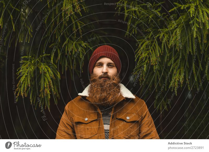 Bartiger Mann am grünen Baum stehend Tourist Natur bärtig warme Kleidung Tanne Blick in die Kamera Wald Ferien & Urlaub & Reisen Abenteuer Landschaft wandern