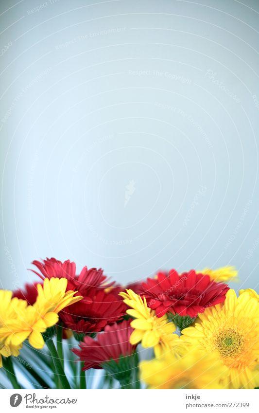 Blumen schmücken das Leben... schön Sommer rot gelb Blüte Gefühle natürlich Garten Stimmung hell Luft Dekoration & Verzierung Geburtstag Blühend Blumenstrauß