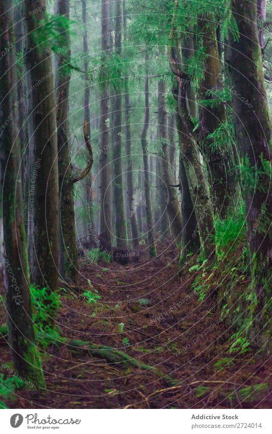 Grüne Bäume im Wald grün Natur Blatt Moos Rüssel Tag Licht Baum Umwelt Sommer hell Jahreszeiten natürlich Sonnenlicht Azoren Beautyfotografie Park Farbe