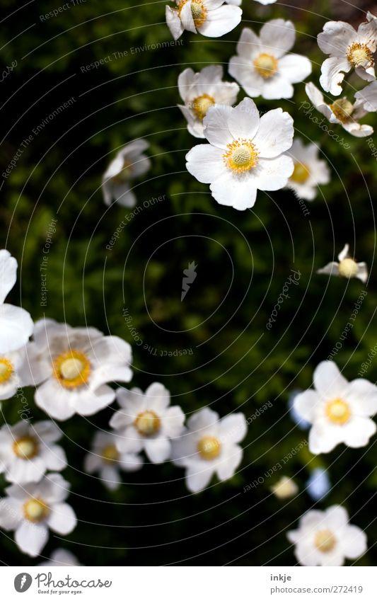 Blumen schmücken das Leben... Pflanze Sommer Schönes Wetter Blüte Garten Park Blumenbeet Blühend Zusammensein natürlich schön viele gelb grün weiß Stimmung