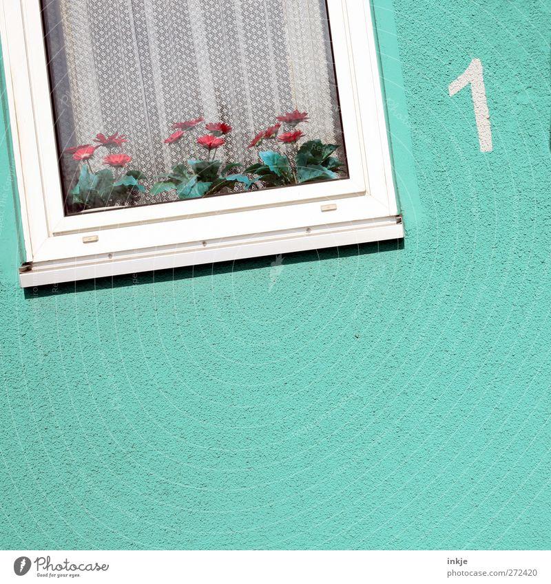Blumen schmücken das Leben... Lifestyle Häusliches Leben Wohnung Dekoration & Verzierung Fenster Menschenleer Haus Fassade Gardine Fensterrahmen