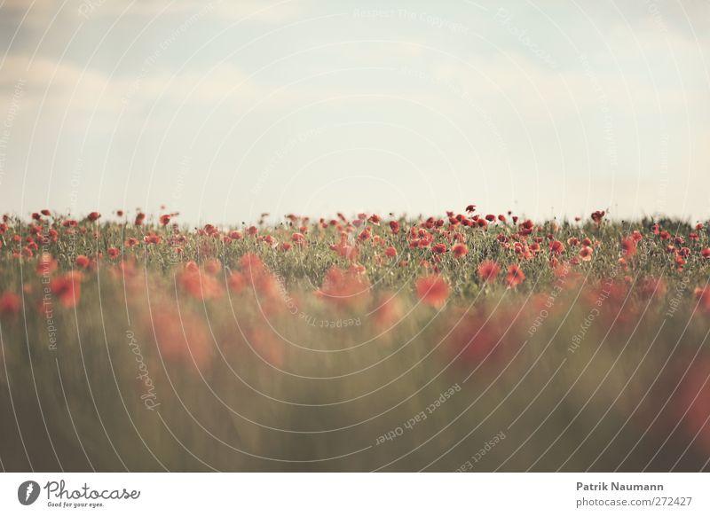 halb und halb Himmel Natur schön rot Pflanze Sommer Tier Einsamkeit Wolken Erholung Ferne Umwelt Liebe Landschaft hell Feld