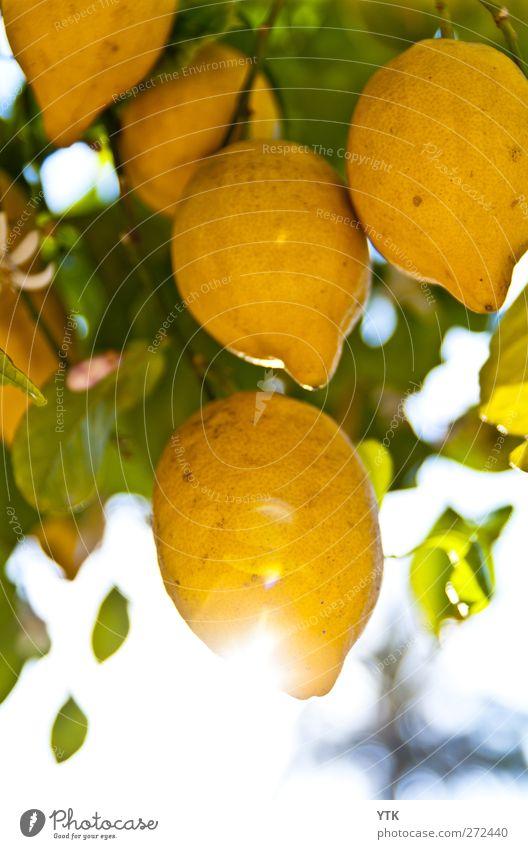 Sunny Sour Himmel Natur Pflanze Sonne Sommer Blatt Umwelt gelb Luft Klima glänzend frisch Schönes Wetter rein Landwirtschaft Ernte