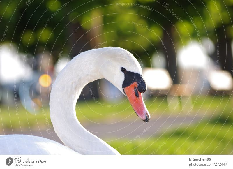 Wer nervt mich da? Natur weiß grün schön Tier Auge Kopf Vogel Park Wildtier sitzen elegant ästhetisch bedrohlich beobachten Romantik