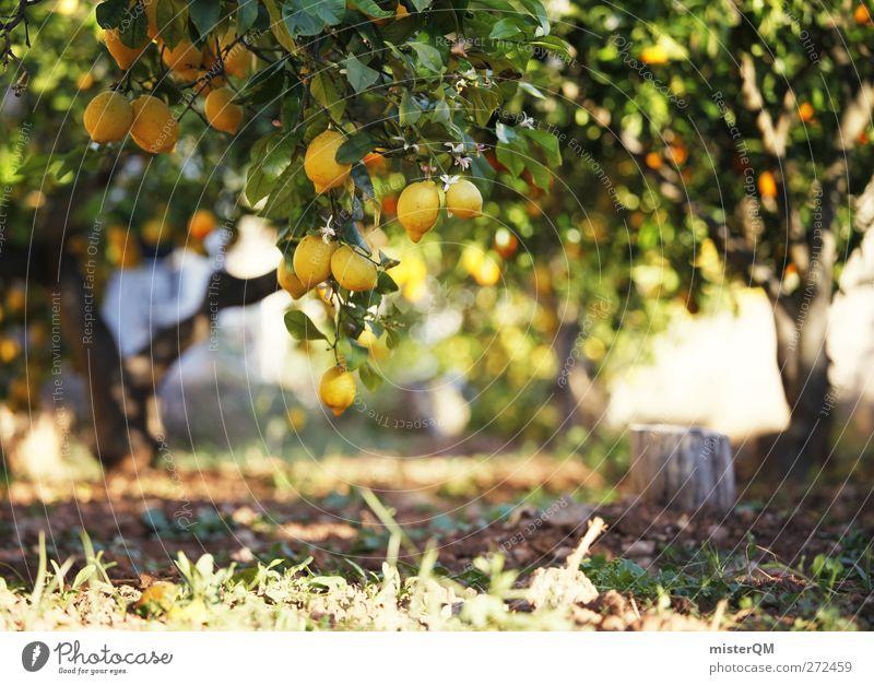 Orange Garden III Umwelt Natur Landschaft Pflanze ästhetisch Zufriedenheit Zitrone Zitronensaft zitronengelb Zitronenbaum Zitronenblatt Baum Frucht Gesundheit