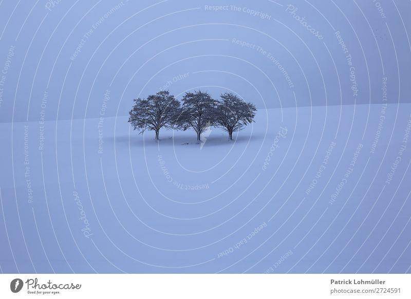 Nackt Umwelt Natur Landschaft Himmel Winter Klima schlechtes Wetter Eis Frost Schnee Schneefall Baum Hügel Deutschland Europa außergewöhnlich dunkel kalt blau