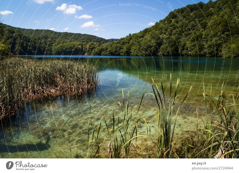 Idyllisch Ferien & Urlaub & Reisen Ausflug Sommer Sommerurlaub Natur Landschaft Himmel Schönes Wetter Schilfrohr Wald Hügel Seeufer grün Idylle nachhaltig ruhig