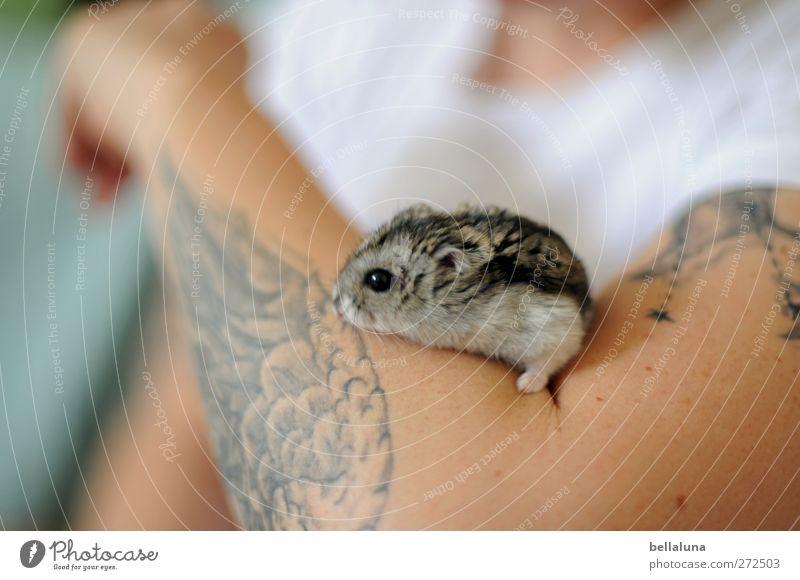 Karli | Auf Adlers Schwingen Mensch feminin Junge Frau Jugendliche Erwachsene Leben Arme 1 Tier Haustier sitzen weich Hamster Zwerghamster Tattoo T-Shirt weiß