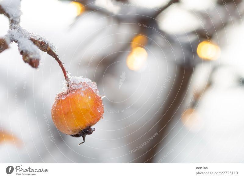 Zierapfel mit Schnee Natur weiß Winter orange Lichterkette Apfelbaum