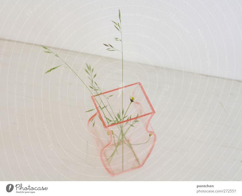 wenig bis gar nichts weiß Pflanze Blume Wand Gras hell rosa Dekoration & Verzierung trist Kunststoff Blumenstrauß durchsichtig Gänseblümchen Ähren Blumenvase