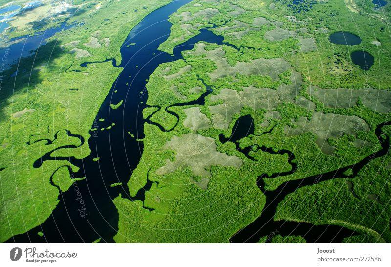 Salamander Umwelt Natur Landschaft Pflanze Erde Wasser Wiese Flussufer Moor Sumpf Bach fliegen außergewöhnlich Unendlichkeit grün Abenteuer entdecken Freiheit