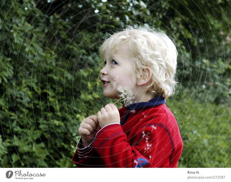 Mama guck mal ! Junge 1 Mensch 3-8 Jahre Kind Kindheit Frühling Schönes Wetter Jacke blond Locken Lächeln Spielen verblüht Fröhlichkeit Glück natürlich grün rot