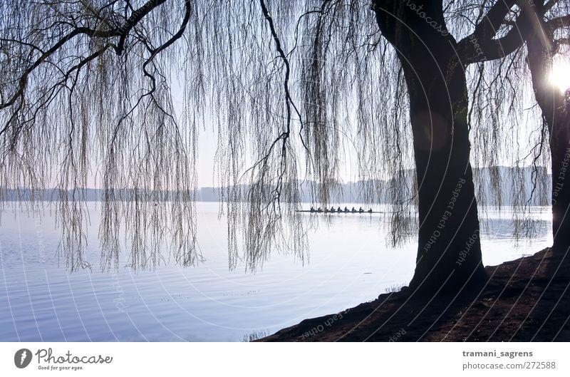 Morgensonne Rudern achter Ausflug Landschaft Wasser Seeufer Alster Hamburg Außenalster Ruderboot kalt blau schwarz Zufriedenheit Idylle Farbfoto Gedeckte Farben