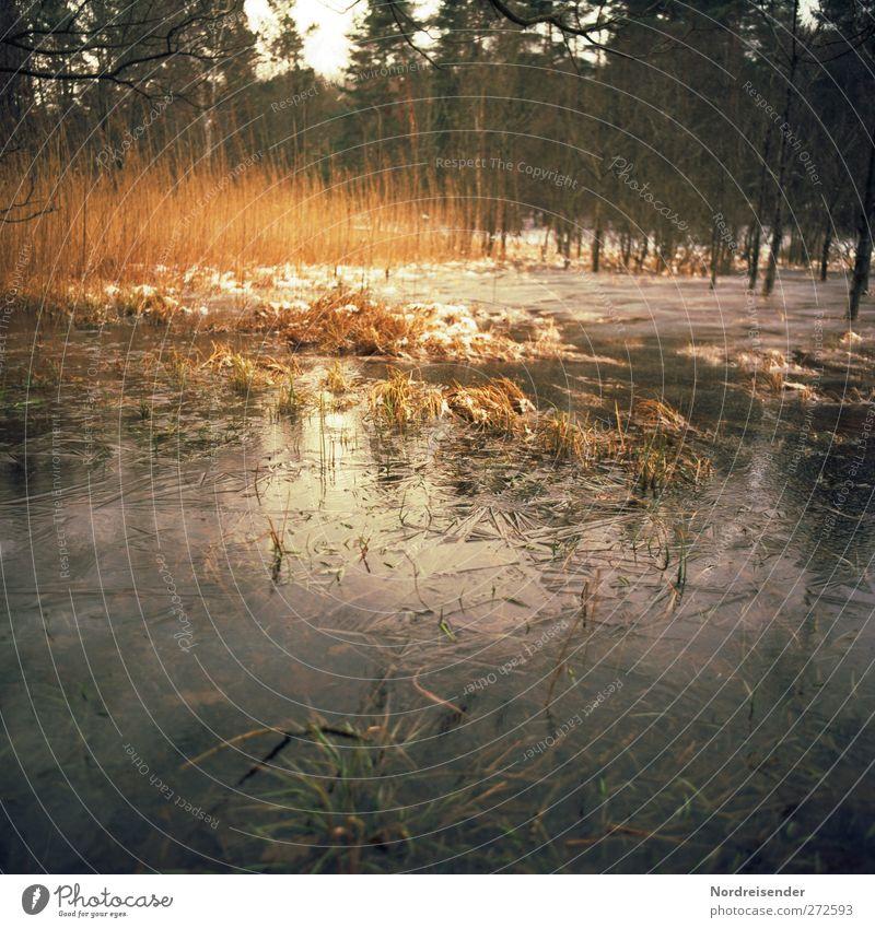Sumpf Sinnesorgane ruhig Abenteuer Natur Landschaft Pflanze Wasser Herbst Winter Baum Moor beobachten träumen bedrohlich kalt Respekt bizarr Endzeitstimmung