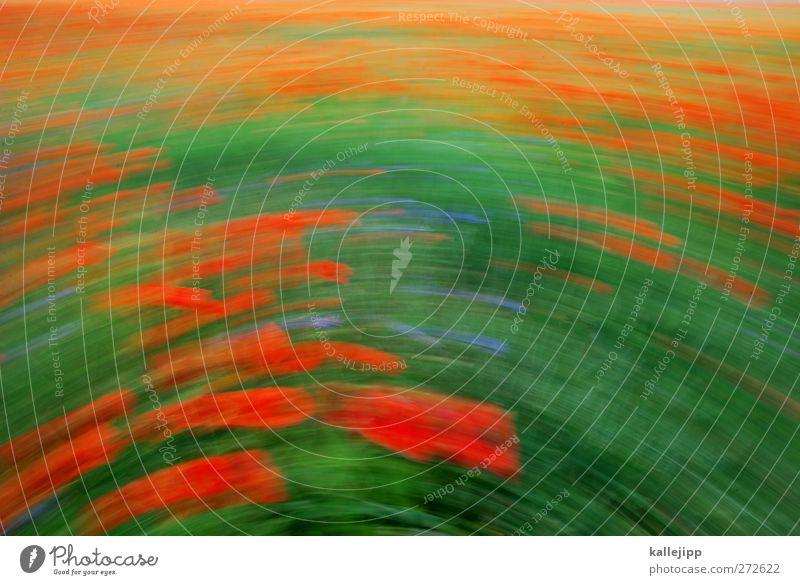 the summerwind Umwelt Natur Landschaft Pflanze Tier Sommer Klima Wetter Schönes Wetter Wind Gras Blatt Blüte Grünpflanze Nutzpflanze Wildpflanze Wiese Feld