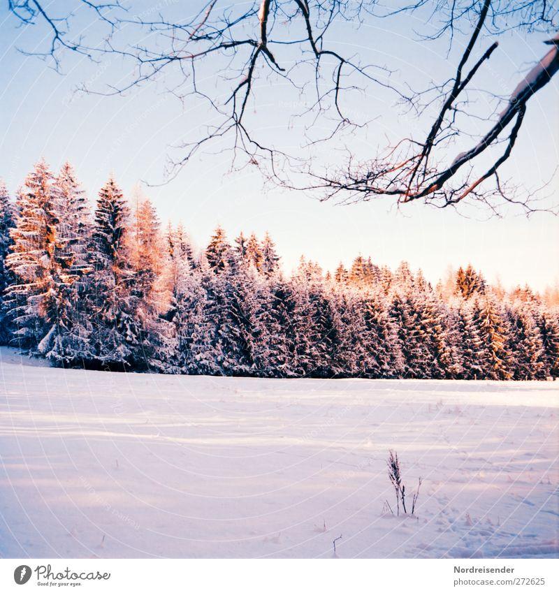 Winterabend Natur Baum Pflanze Farbe Einsamkeit ruhig Wald Landschaft Schnee Eis Stimmung Wetter Klima wandern frisch