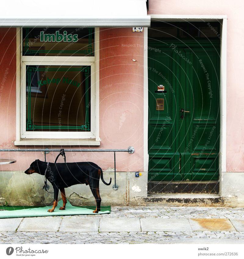 Kundschaft! Mauer Wand Treppe Fassade Fenster Tür Namensschild Imbiss Schriftzeichen Buchstaben Hund 1 Tier stehen Traurigkeit warten trist grau grün rosa rot