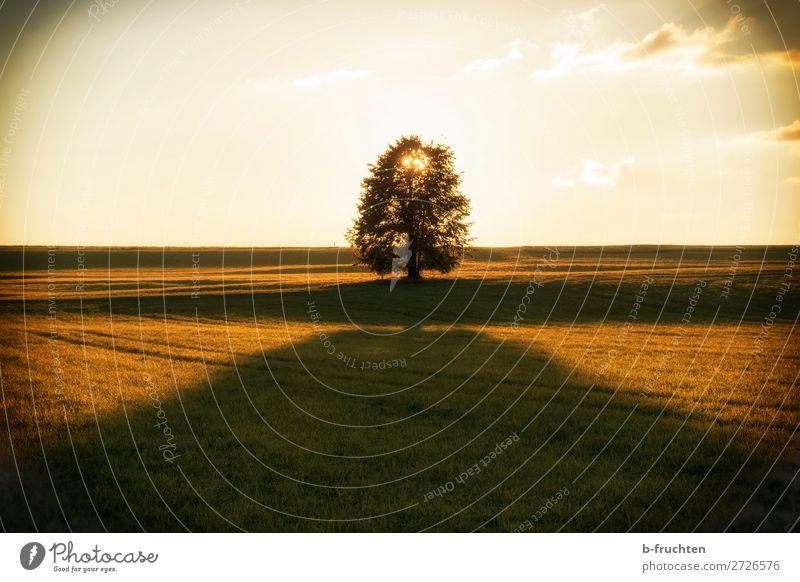 Sonnenuntergang im Herbst Erholung ruhig Meditation Natur Himmel Sonnenaufgang Sonnenlicht Baum Gras Wiese Feld träumen frisch Wärme Lebensfreude Geborgenheit