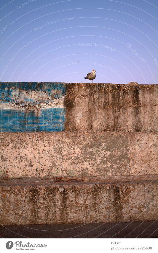 Eine Möwe, macht schon einen Frühling Himmel Ferien & Urlaub & Reisen Tier Ferne Wand Glück Tourismus Mauer Freiheit Vogel Fassade Ausflug Zufriedenheit