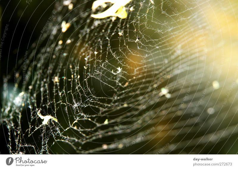 Den Faden verloren Tier Frühling dünn fest schwarz Makroaufnahme Spinnennetz Nähgarn Angst Engmaschig verbinden Farbfoto Außenaufnahme Menschenleer Tag Licht