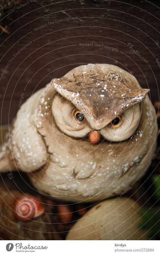 Die Katze von morgen Dekoration & Verzierung Skulptur Wildtier Vogel Schnecke Tiergesicht Eulenvögel Schneckenhaus 1 Stein beobachten Blick trendy lustig schön