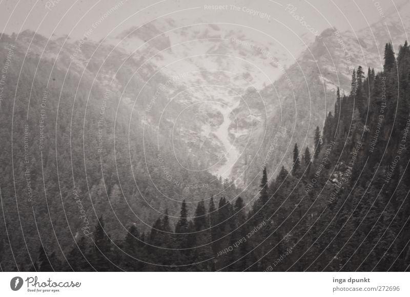 Über den Wäldern... Himmel Natur Baum Pflanze Einsamkeit Wald Ferne Umwelt Landschaft kalt Berge u. Gebirge grau Eis Felsen außergewöhnlich Nebel