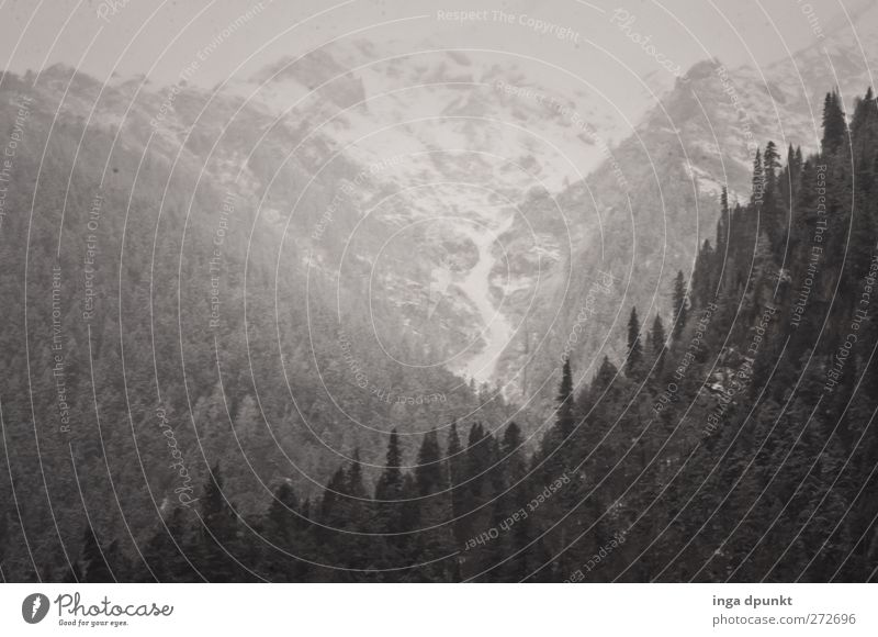 Über den Wäldern... Umwelt Natur Landschaft Pflanze Urelemente Himmel schlechtes Wetter Nebel Eis Frost Baum Wald Nadelwald Felsen Berge u. Gebirge Gipfel