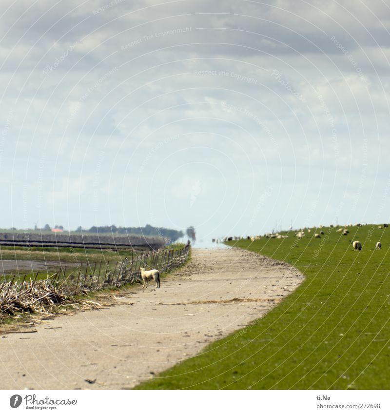 wo gehts zum Strand   Helmsand Natur Sommer Umwelt Landschaft Straße Gras Frühling Freiheit Tierjunges natürlich wandern Tourismus Neugier Nordsee Bucht