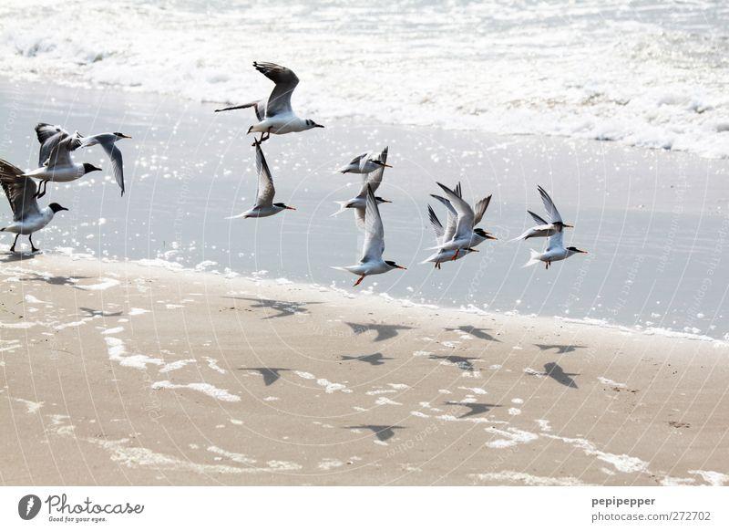 V v Vv V v v Sommer Meer Strand Tier Vogel Wellen fliegen Tiergruppe Zusammenhalt Möwe