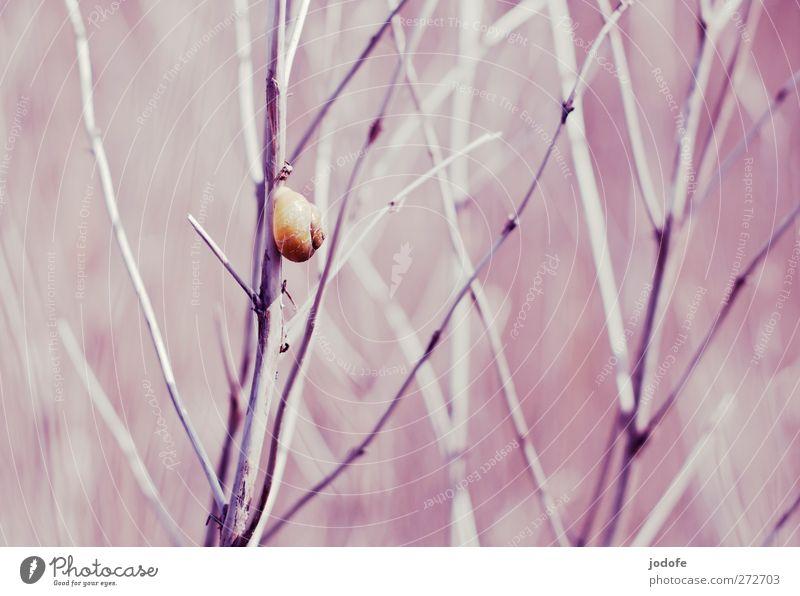 Hiddensee | Aufstieg im Schneckentempo Natur Pflanze Tier Umwelt gelb Frühling Küste Sträucher festhalten Klettern trocken Ostsee Schilfrohr aufsteigen