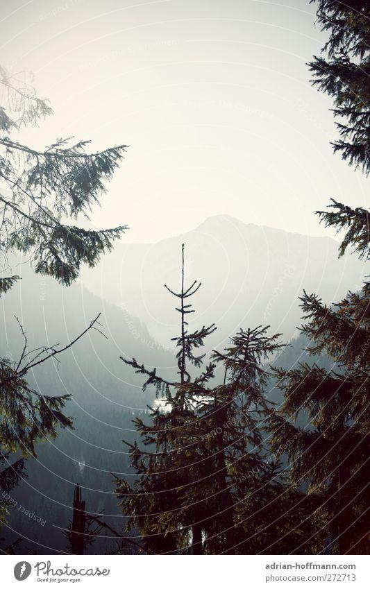 Blick ins Tal Himmel Natur Baum ruhig Landschaft Berge u. Gebirge Horizont Alpen