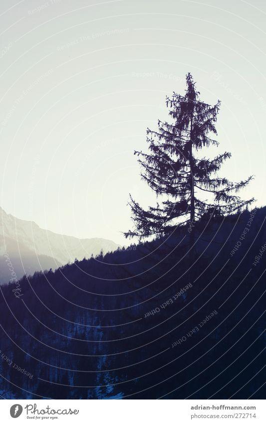 Der Berg ruft Natur Landschaft Pflanze Himmel Baum Alpen Berge u. Gebirge Idylle ruhig Farbfoto Außenaufnahme Textfreiraum links Tag Schatten Kontrast