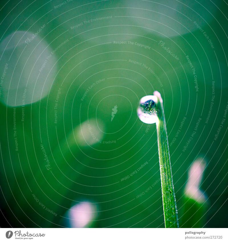 Morgentau (II) Umwelt Natur Pflanze Wasser Wassertropfen Sonnenlicht Frühling Sommer Wetter Schönes Wetter Gras Blatt Grünpflanze Garten Wiese nass grün