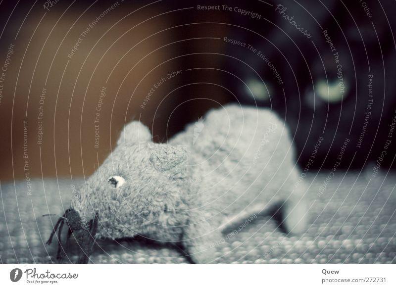 soon… Tier Haustier Katze Maus Fell 2 beobachten Jagd grau schwarz gefährlich Katzenauge Auge Stofftiere warten Farbfoto Innenaufnahme Nahaufnahme Kunstlicht
